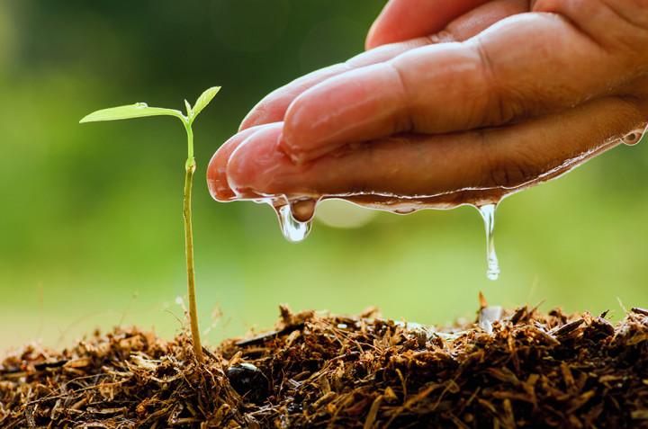 Plant Production NQF 2