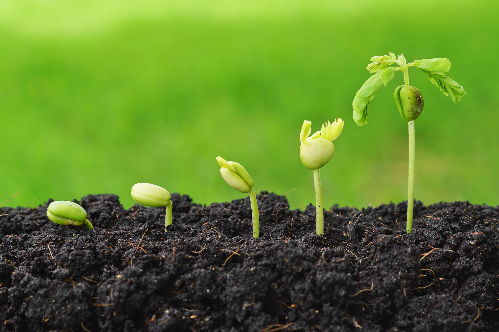 Plant Production NQF 3